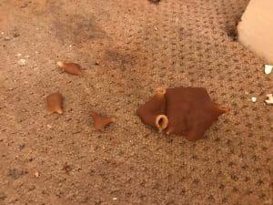 Mushroom growth in carpet